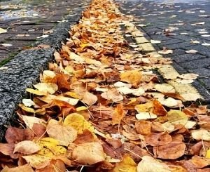 The City of Paris and Cemex join forces to remove dead leaves by the Seine