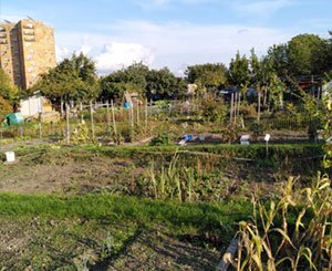 """Paris Olympics: in the workers' gardens of Aubervilliers, we want """"pumpkins, not concrete"""""""