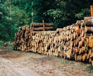 Launch of a private fund to develop the timber industry in construction