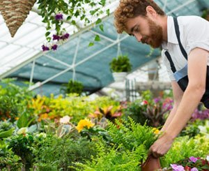 The garden market breaks growth records