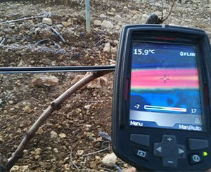 Proteplan, the heating cable from Prysmian Group to protect vineyards from frost