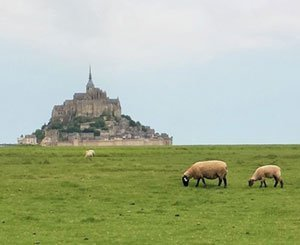 A breeder of salt meadows in the bay of Mont-Saint-Michel refuses to destroy his sheepfold