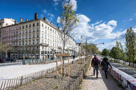 Planting of trees quai Sarrail. © Thierry Fournier.