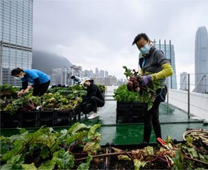 In Hong Kong, agriculture in the clouds to reconnect with its food
