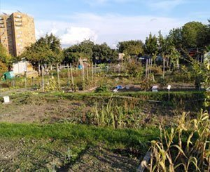 JO-2024: evacuation of the occupants of the allotment gardens of Aubervilliers