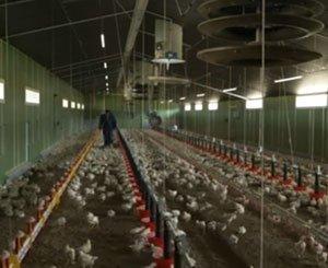 Livestock buildings designed for animal welfare