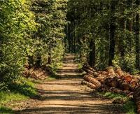 Le bois de Chartreuse désormais AOC, une première pour la filière