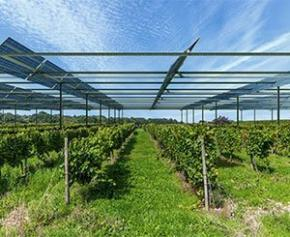 Inauguration de la première centrale vitivoltaïque dans les Pyrénées-Orientales