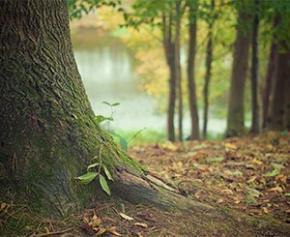 Nouveau contrat de filière pour le bois