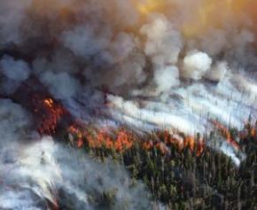 6.500 hectares incendiés et 4.000 pompiers mobilisés durant la canicule en France