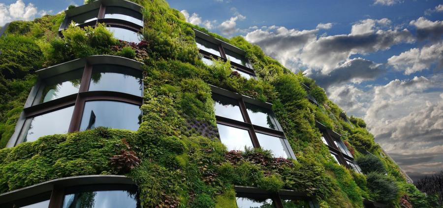 Retours d'expérience sur la végétalisation et le confort d'été dans le bâti