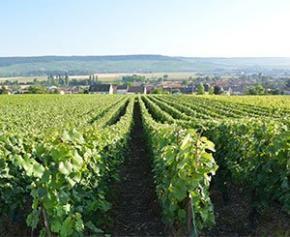 """En Ile-de-France, des """"couveuses agricoles"""" pour revenir à une agriculture..."""
