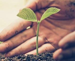 Le Groupe Duval s'engage à planter 100.000 arbres