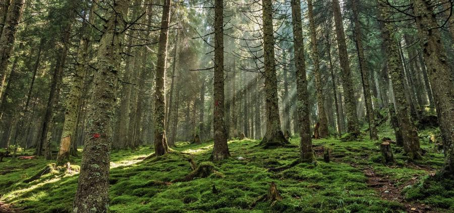 Évolution de la demande du bois sur l'ensemble du secteur du bâtiment d'ici 2020, 2035 et 2050