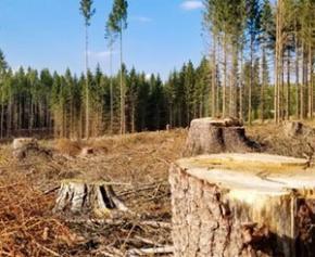 Le CESE demande à l'UE de nouvelles mesures pour lutter contre la déforestation
