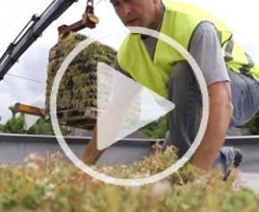 Végétaliser une toiture terrasse avec Hydropack® conçu par Le Prieuré