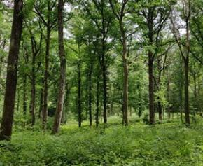 The National Forestry Office (ONF) will cut nearly 500 jobs in five years