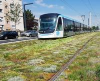 Ecovegetal supplies 11.000 m² of vegetated mats for the T9 Tramway line in Ile-de-France