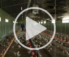Des bâtiments d'élevage conçus pour le bien-être animal
